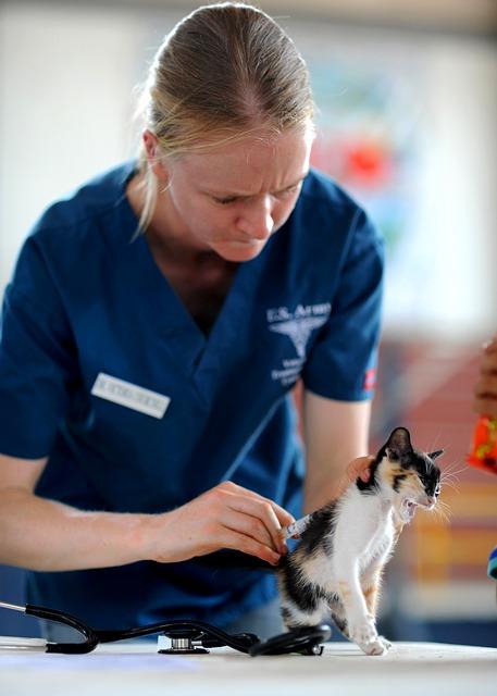 Veterinär som undersöker en katt